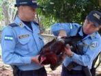 polisi-honduras-tangkap-ayam_20170127_090235.jpg