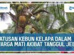 ratusan-pohon-kelapa-dalam-warga-desa-alang-alang-mati-akibat-tanggul-jebol.jpg