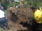 resahkan-warga-beruang-madu-berhasil-ditangkap-petugas-bksda.jpg