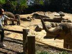 salah-satu-musisi-sedang-menghibur-gajah-di-kebun-binatang-melbourne.jpg
