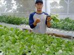 sandys-farm-hydroponic.jpg