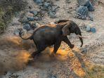 seekor-gajah-jantan-berlari-di-sekitar-sungai-shire-suaka-margasatwa-majete-malawi_20170822_162600.jpg