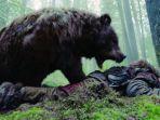 serangan-beruang.jpg