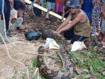 ular-piton-ditemukan-di-kebun-warga_20180329_221618.jpg