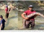 ular-piton-raksasa.jpg