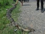 ular-piton_20180402_153647.jpg