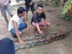 ular-sawo-mersam_20181024_120503.jpg
