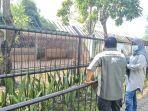 uni-harimau-sumatera-di-taman-rimba.jpg