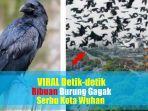 video-viral-detik-detik-ribuan-burung-gagak-serbu-kota-wuhan-warga-sebut-cium-aroma-kematian.jpg