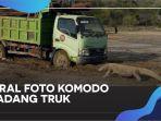 viral-foto-komodo-hadang-truk-di-pulau-rinca-begini-penjelasan-kementerian-lhk.jpg