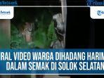 viral-video-warga-dihadang-harimau.jpg