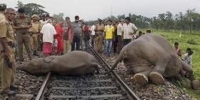 Empat Gajah Mati Ditabrak Kereta Api