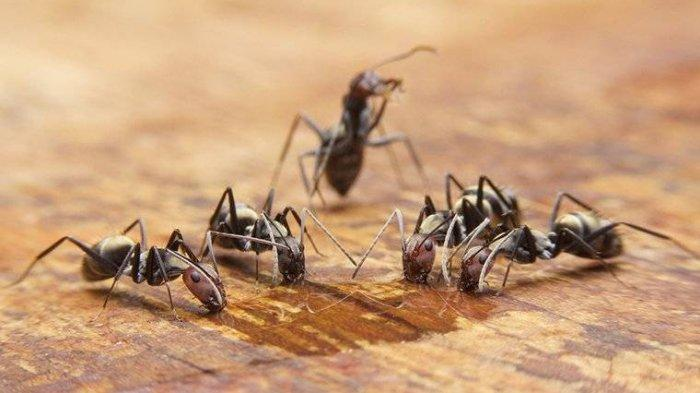 Air Kencing Dikerubuti Semut Apakah Tanda Diabetes?