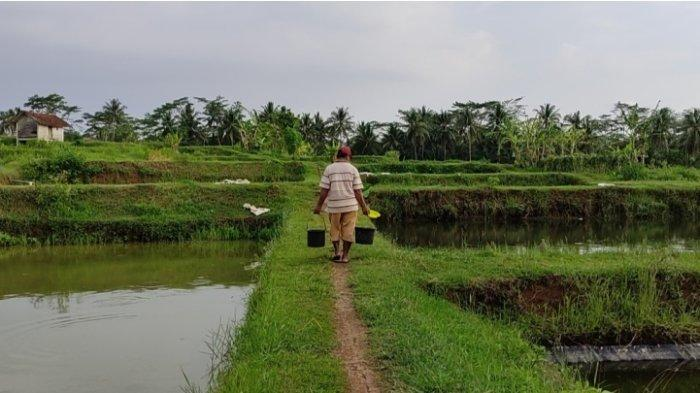 Inspiratif, Modal Awal Iuran Rp 125 Ribu, Kelompok Ikan di Banjarnegara Kini Miliki Aset Rp 1 Miliar