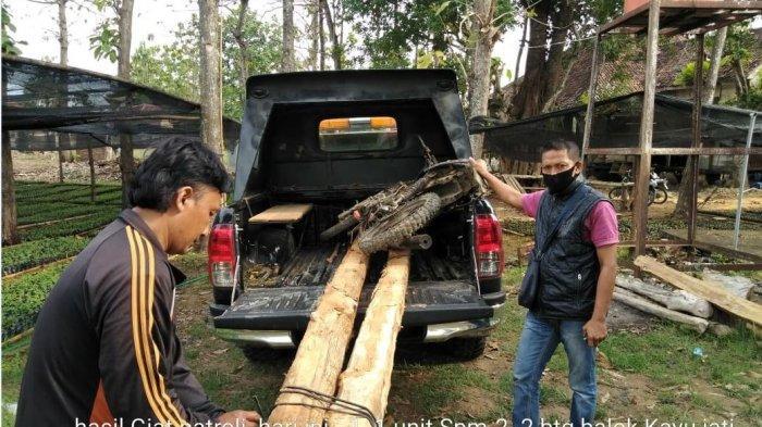 Polisi Hutan di Rembang Berhasil Amankan Kayu Jati dari Tangan Pencuri