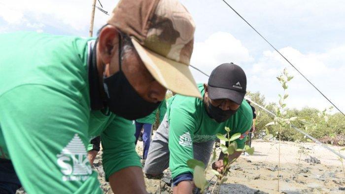 Anggota Satgas Bencana PTSG melakukan penanaman mangrove di Pantai Wates, Tasikharjo, Kaliori.