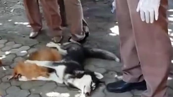 Bocah 7 Tahun Meninggal Seusai Digigit Anjing Rabies, Pemilik Lalu Bunuh dan Makan Anjing