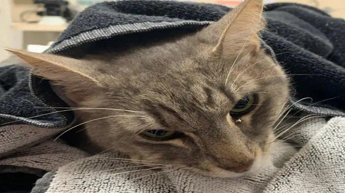 Arthur Si Kucing Selamatkan Dua Bocah dari Serangan Ular, Mati Terkena Gigitan