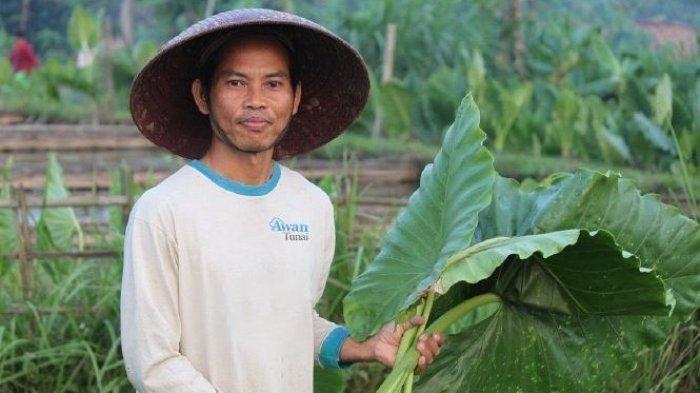 AwanTunai Gandeng SayurBox Guna Membawa Akses Pembiayaan Terjangkau ke UMKM Petani