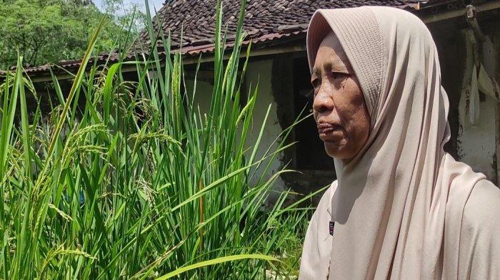 Kisah Pengusaha Banjarnegara Jadi Petani Organik Sukses, Kerja Keras Demi Rawat Ibu Sakit