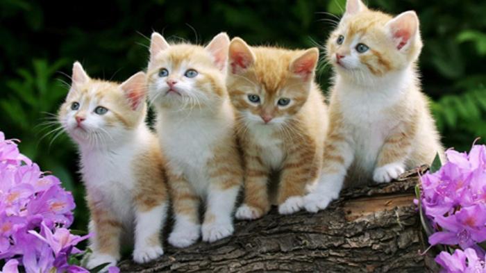 Begini Cara Hitung Usia Kucing Perhatikan Warna Gigi Dan Bulunya Tribun Jateng