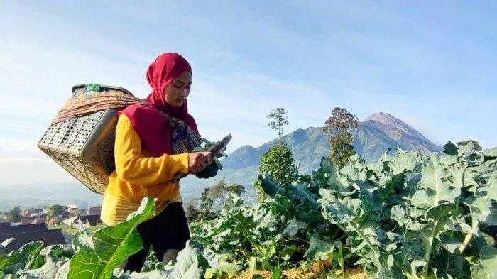 Sepi Job Manggung, Biduan Dangdut di Boyolali Beralih Jadi Petani di Lereng Gunung Merbabu