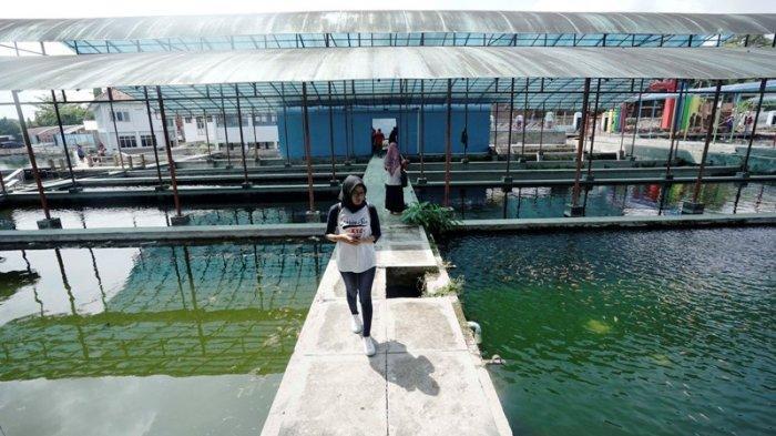 Boyolali Berupaya Tidak Hanya Sedia Benih Tapi Juga Produksi Ikan Hias