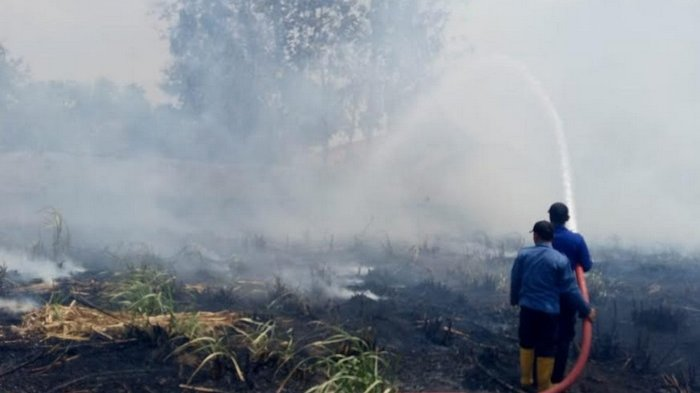 Musim Kemarau Panjang, BPBD Kota Tegal Siagakan Relawan Antisipasi Kebakaran