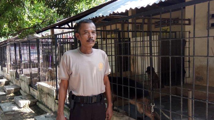 KISAH Bripka Ahmad Sarji, 25 Tahun Jadi Pawang Satwa, Sampai Nggak Sakit Digigit Anjing