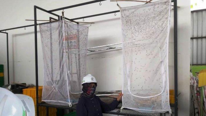 UPT Pengembangan Konservasi Unnes Budidaya Maggot Atasi Masalah Sampah Organik