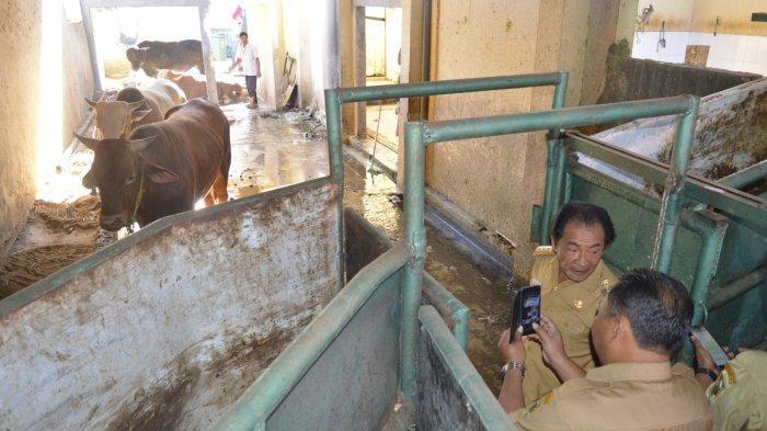 Intip Proses Pemotongan Hewan di RPH Banjarnegara, Sapi Ditembak Bius Sebelum Disembelih