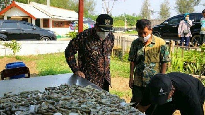 Sektor Pertanian, Kehutanan, dan Perikanan Jadi Tulang Punggung Laju Perekonomian Kabupaten Pemalang