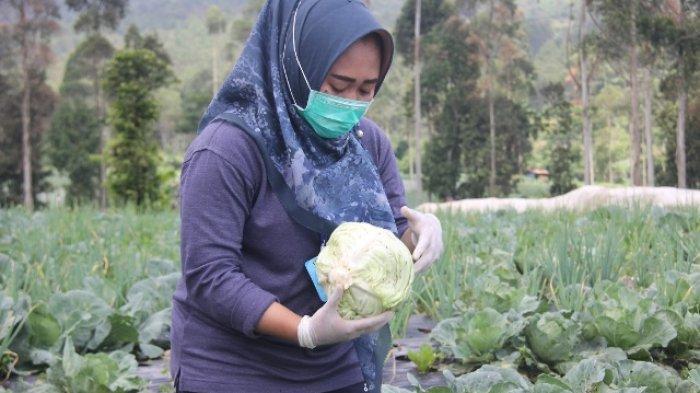 Potensi Hujan di Sejumlah Wilayah, Begini Prakiraan Cuaca Jateng Menurut BMKG Kamis 23 Juli 2020