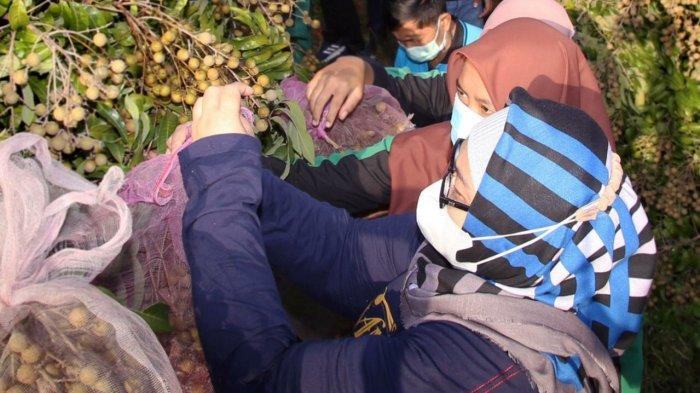Bupati Sragen Panen Kelengkeng di SMKN 1 Kedawung : Didik Anak Bangga Jadi Petani Milenial