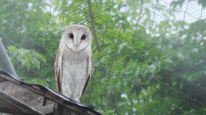 Tag Lagu Anak Burung Hantu Chord Kunci Gitar Burung Hantu Tribun Jateng