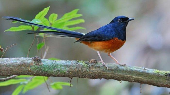 Karantina Pertanian Semarang Berhasil Gagalkan Pengiriman 5 Burung Ilegal dari Kumai