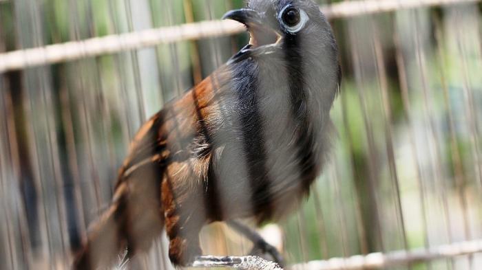 Arti Mimpi Menangkap Burung, Ada Enam Penafsiran Mayoritas Pertanda Baik
