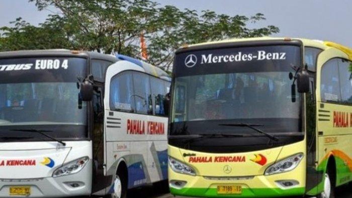 Bus Pahala Kencana Luncurkan Super Executive Jakarta-Madura Kursi Lebar Pakai Leg Rest