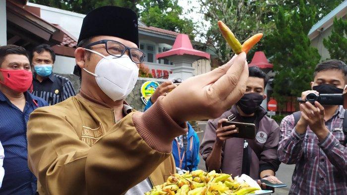 Bupati Banyumas, Achmad Husein bersama Kepala Loka POM Banyumas, Suliyanto saat menunjukan temuan cabai yang diduga diberi cat merah saat melakukan rilis di Pendopo Si Panji, Purwokerto, pada Rabu (30/12/2020).