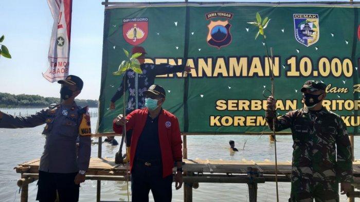 Cegah Abrasi di Kawasan Pesisir Sayung, Kodim 0716 Demak Tanam 10.000 Mangrove