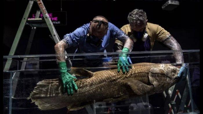 Niat Berburu Hiu, Para Nelayan Ini Justru Tangkap Ikan Era Dinosaurus yang Dipercaya Sudah Punah