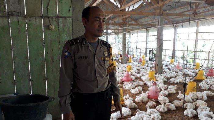 Tak Cuma Patroli di Wilayahnya, Aiptda Jufriadi Juga Sambangi Kandang Ayam