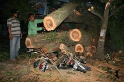 Pohon Selesai Dievakuasi, Akses Jalan Normal Kembali