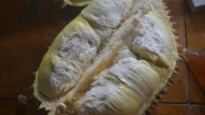 Legitnya Durian Kromo Banyumas, Bedaging Tebal dengan Warna Kuning Menggoda