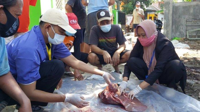 DKPPP Kota Tegal Temukan Cacing Pita di Tiga Sapi Kurban, Ini Imbauan untuk Masyarakat