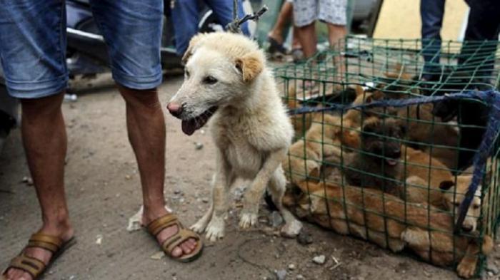 LUIS Desak Pemkot Solo Hentikan Penjualan Daging Anjing, Contoh Pemkab Karanganyar