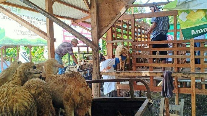 ACT Tegal Bagikan 21 Domba ke Pesantren, Nantinya Dimanfaatkan untuk Hewan Kurban