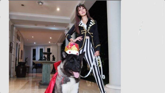 Foto-foto Maximus Decimus Meridius Bakrie, Anjing Akita Nia Ramadhani yang Ultahnya Dirayakan