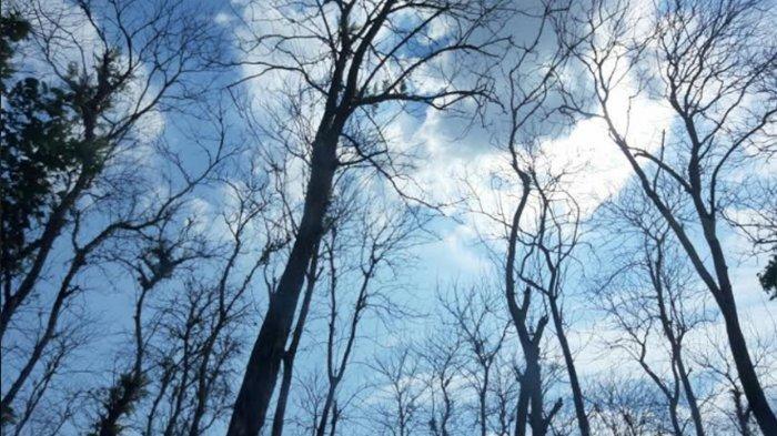 Prakiraan Cuaca BMKG Pati Hari Ini, Sabtu 20 Maret 2021