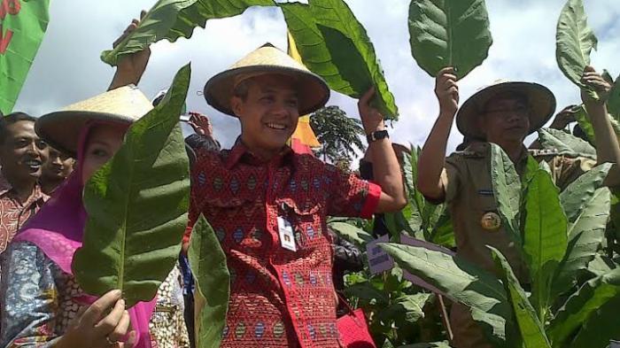 Petani Tembakau Di Pelosok Temanggung Sudah Punya Website